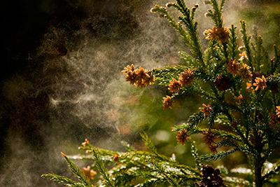 アレルギーの病気について